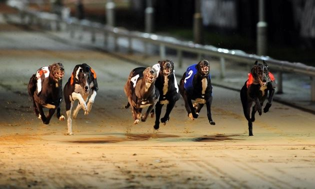dog racing betting explained variance