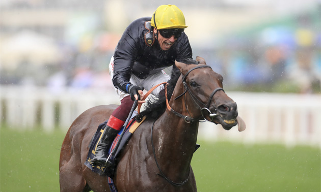 Japan gets up to win the Juddmonte at York