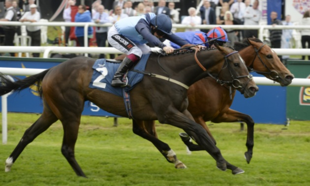 Sprint Cup Preview: Danzeno looks a solid option at Haydock