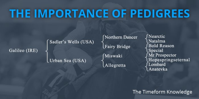 The Timeform Knowledge: The Importance of Pedigrees