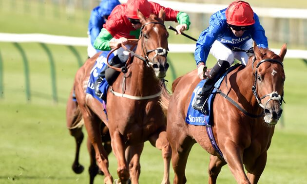 My Free Horse Racing Tips