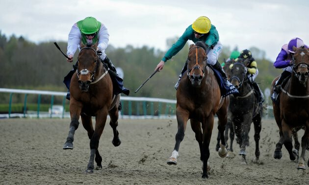 Flagged Up - Betting Tips | Timeform's best bet of the day