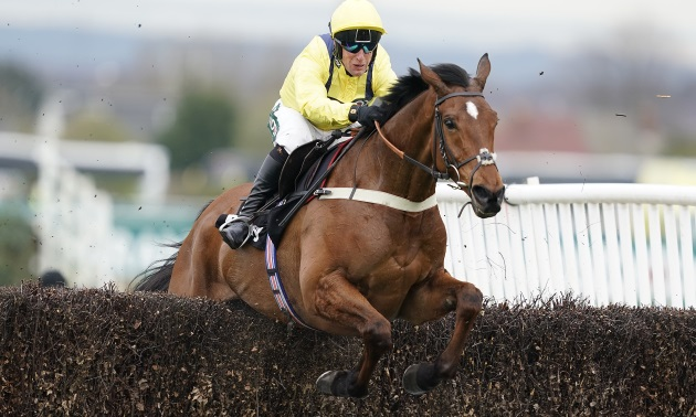 Betfair Chase preview: Lots to like about Lostintranslation