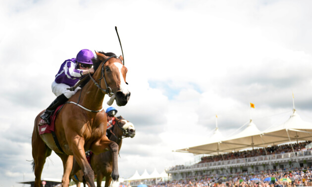 Newmarket and Naas Ratings Update | Changes to the Timeform