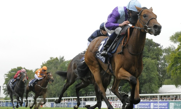 My Timeform: Eye-catchers from Newmarket and Newbury