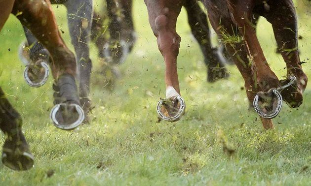 South African Racing Tips: Thursday 21 November
