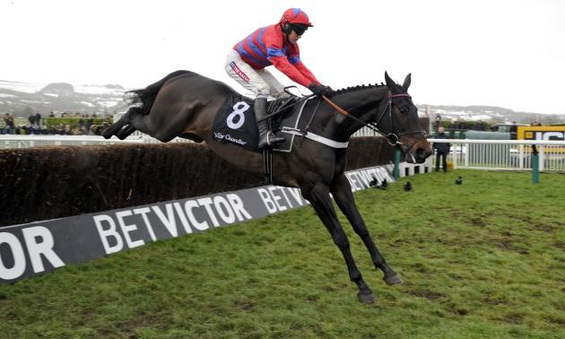 Image result for sprinter sacre horse